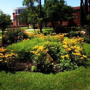 campus flowers May 2014